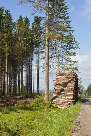 Piles of timber along the forest road photo