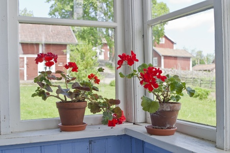 Geraniums flowers on the window sill