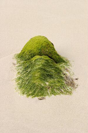 Seaweed on the sand beach photo
