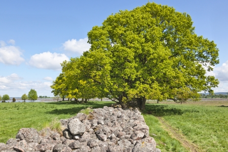 Old stone wall in the meadow with large trees Stock Photo - 13801620
