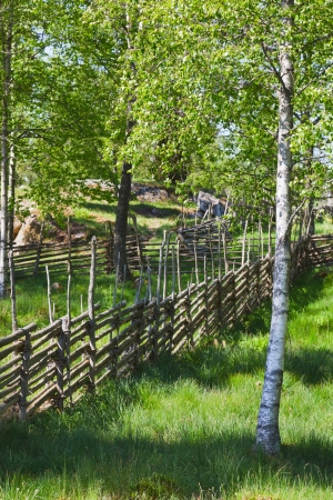 Summer meadow with a wooden fence in the countryside Imagens