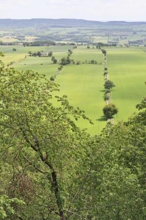 tierra fertil: Ver m�s campos de cultivo con �rboles Foto de archivo