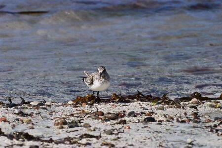 Wading birds at the beach Stock Photo - 13906492