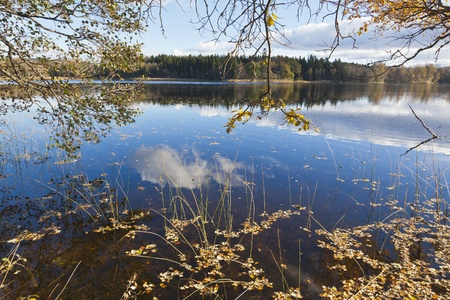 Branches with fall colors that hangs down at the lake Stock Photo - 14129037