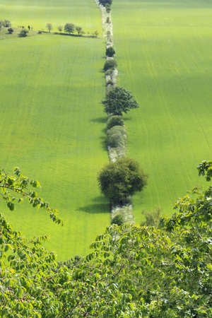 View over fields of crops with trees photo