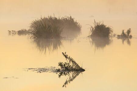 일출 물에있는 식물의 실루엣
