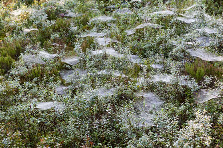 Forest with blueberry and spiders net photo