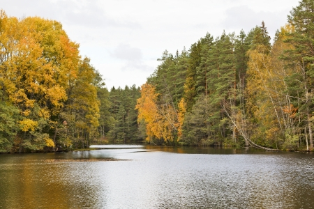 Forest lake in autumn landscape