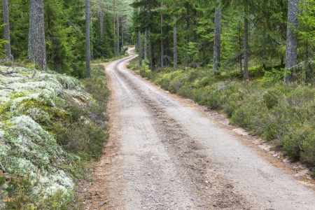 Winding dirt road through the woods photo