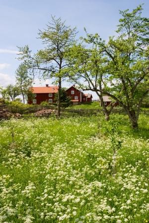 시골에서 여름 초원 스톡 콘텐츠