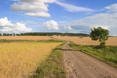Gravel road through a rural landscape of cornfields photo