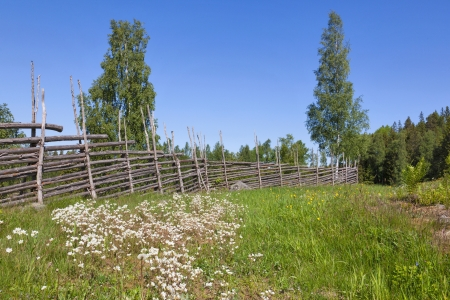 Summer meadow with flowers and a wooden fence in the countryside photo