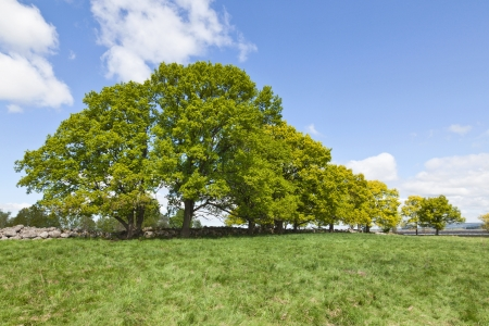 Old stone wall in the meadow with large trees Stock Photo - 14537089