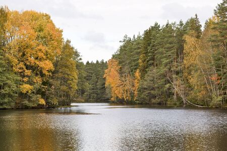 Forest lake in autumn landscape photo