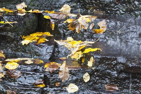 Waterfall with autumn leaves in the water, long exposure time photo
