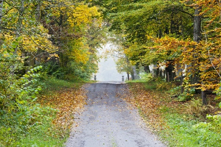 Long countryside road straight stretch through  the deciduous forest in autumn photo