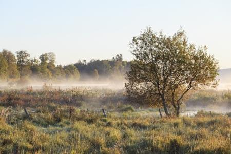 가을 아침 안개 속에서 하나의 나무와 초원