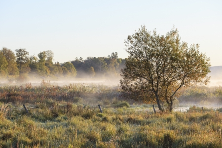 Meadow with single tree in autumn morning mist Stock Photo