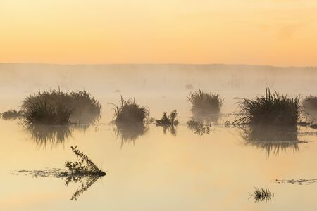 Plant silhouettes in the water at sunrise photo