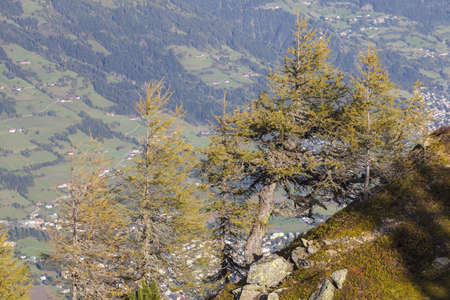 osttirol: Larch tree in autumn and a view in the valley
