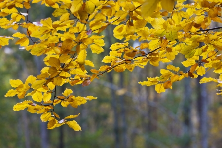 Autumn leaves on the branches in the forest Stock Photo - 14828921