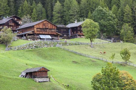 Old farm in the alp with cows on the medow