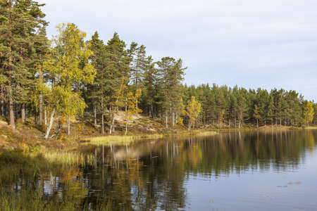 Forest lake with autumn colors photo