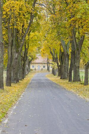 Countryside road in the autumn trees photo