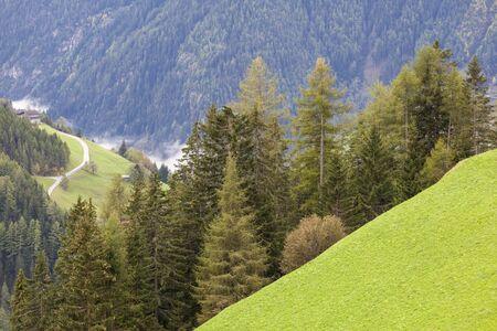 osttirol: Alp view on a valley abd forest
