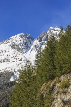 View of mountain peak and larch trees photo