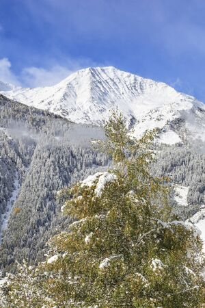 european white birch: Snowcapped mountain with birch tree