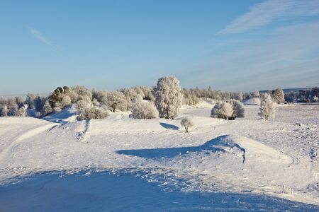 wintery day: Snowy winter landscape with hoarfrost on the tree