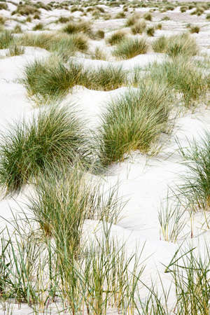Grass turf on the sandy beach Stock Photo - 15782024