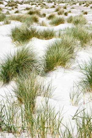 Grass turf on the sandy beach Stock Photo - 15782024
