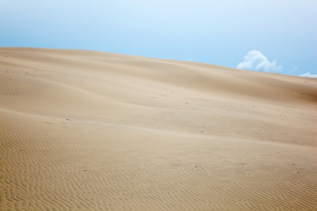 Rolling sand dune landscape Stock Photo - 15842907