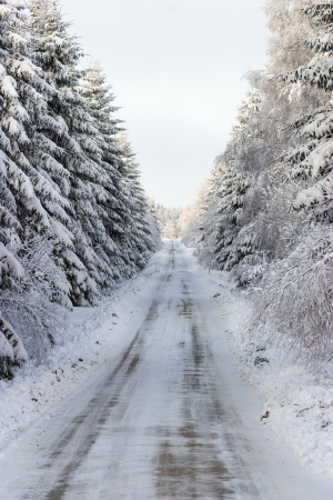 Winter road through the woods Stock Photo - 16003399