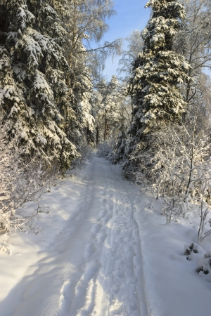 Path in winter woods photo