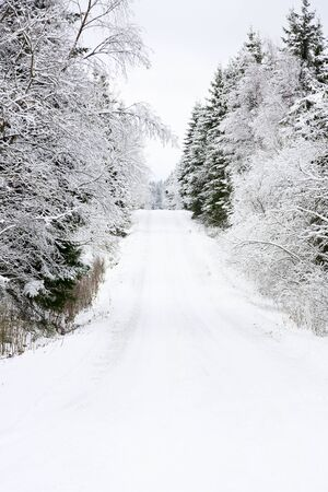Winter road through spruce forest Stock Photo - 16518292
