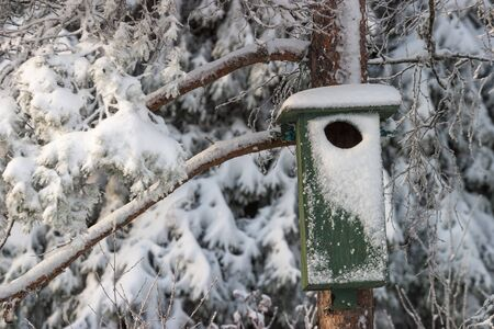 wintry: Birdhouse on a wintry tree