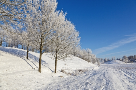 Forest with deciduous trees in winter landscape photo