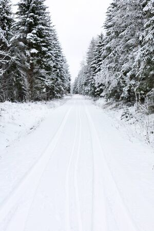 Winter road through spruce forest Stock Photo - 16638706