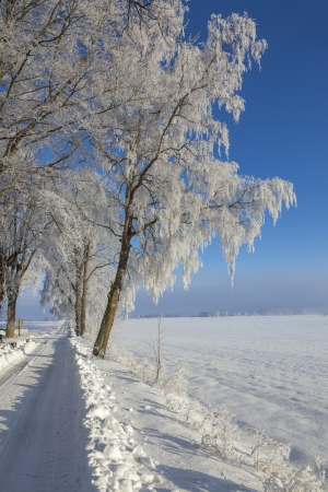 snowbank: Trees on the roadside with a snowbank