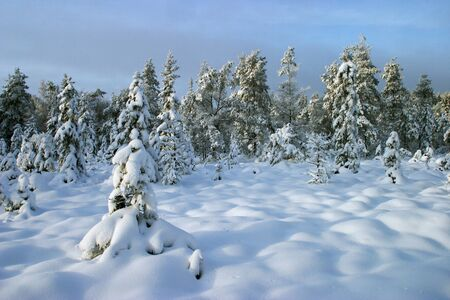 Snowy winter forest Stock Photo - 16771387
