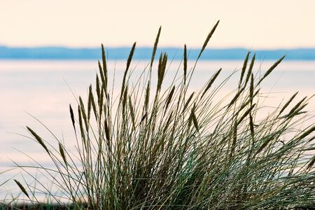 Grass turf on the beach in sunset photo