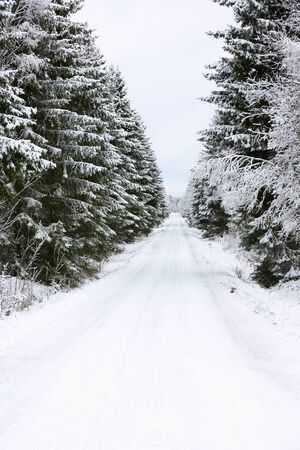 Winter road through spruce forest Stock Photo - 16843299