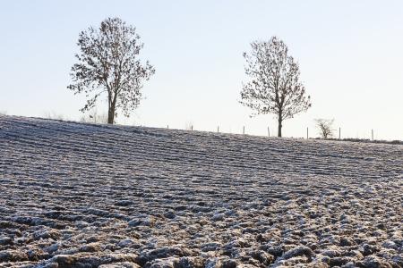 Plowed fields with hoarfrost in winter Stock Photo - 16895512