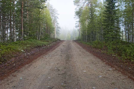 Gravel road in the forest Stock Photo - 17159322