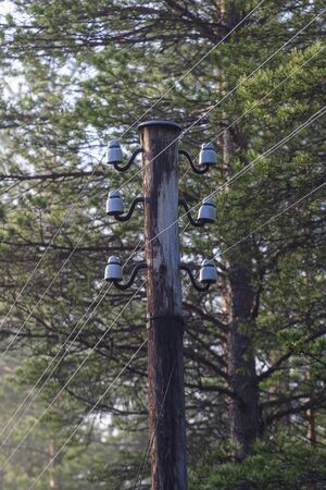 insulators: Telephone poles  in the forest Stock Photo