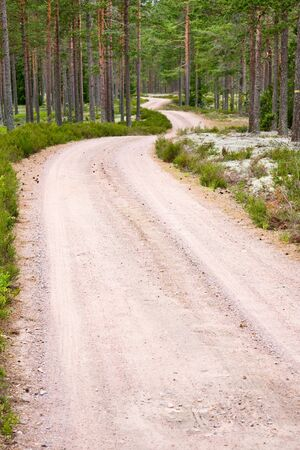 Gravel road in the forest photo