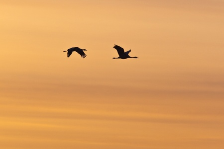 Two cranes in colourful sky photo